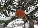 Eis auf Apfel